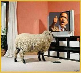 obama sheep